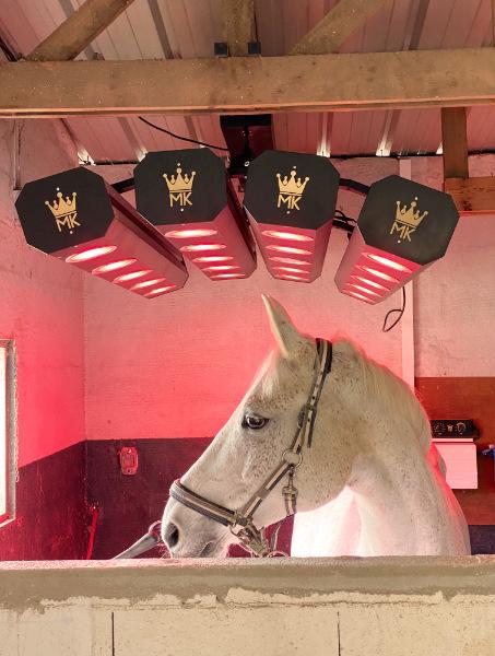 solarium cheval soins